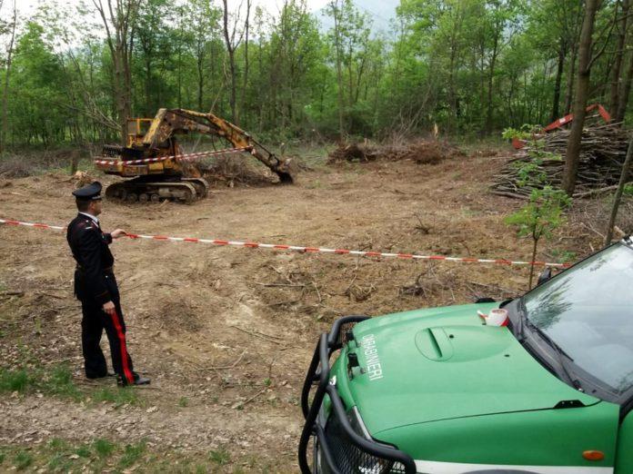 Come segnalare reati ambientali nei boschi?